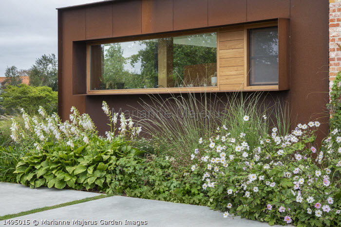 White garden, Anemone x hybrida 'Honorine Jobert', hosta, Cor-Ten steel clad house