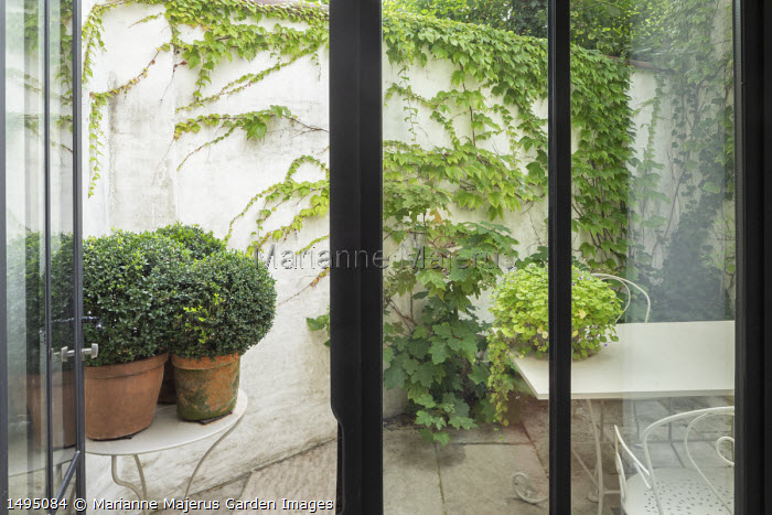 White metal table and chairs on patio in tiny courtyard garden, clipped Buxus sempervirens in pots, hydrangea