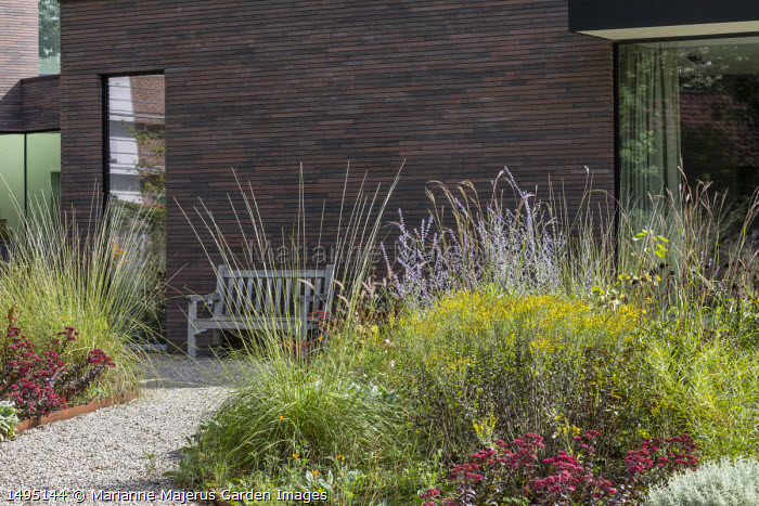 Perovskia 'Blue Spire', Sedum spectabile 'Bloody Mary', solidago, gravel path leading to wooden bench by contemporary house, Muhlenbergia rigens, Andropogon gerardii 'Prairie Summer'