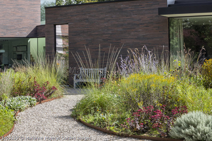 Perovskia 'Blue Spire', Sedum spectabile 'Bloody Mary', solidago, gravel path leading to wooden bench by contemporary house, Muhlenbergia rigens, Santolina chamaecyparissus, Stachys byzantina, Andropogon gerardii 'Prairie Summer'