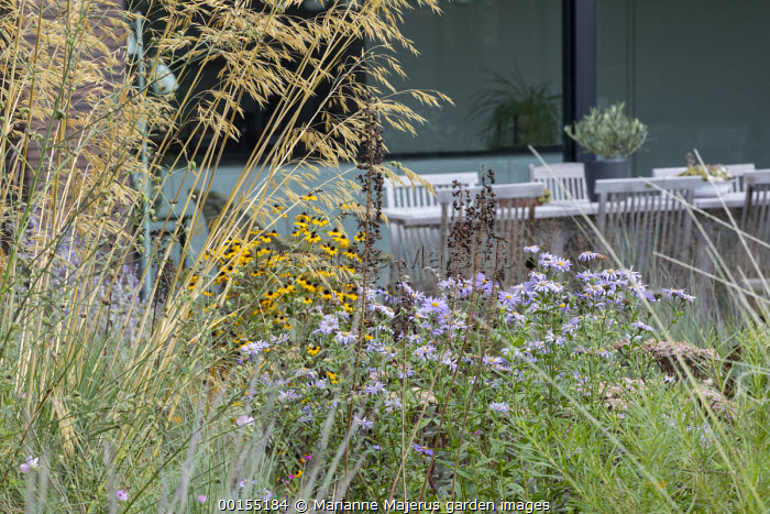 Stipa gigantea, Rudbeckia triloba, aster, wooden table and chairs on patio