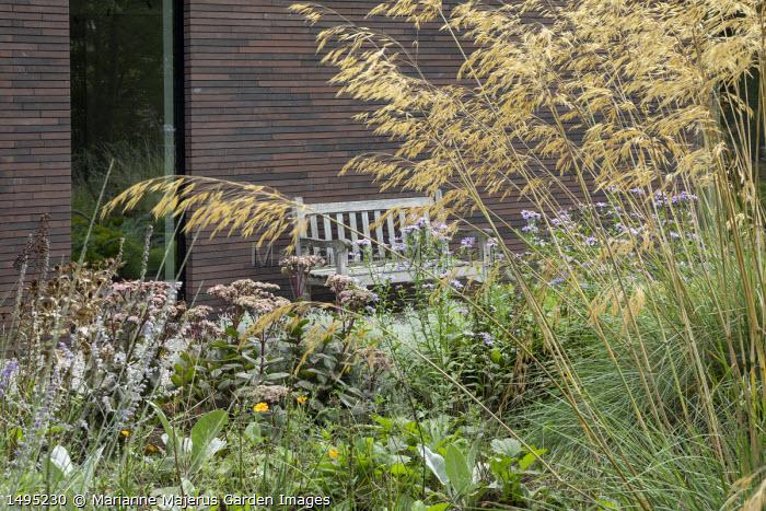 Stipa gigantea, sedum, wooden bench by house