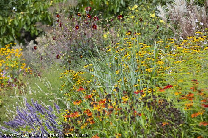 Dahlia 'Mexican Black', Agastache 'Blue Fortune', Schizachyrium scoparium 'Prairie Blues', helenium, Persicaria amplexicaulis 'White Eastfield', Rudbeckia trioba