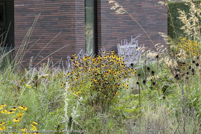 Rudbeckia triloba 'Prairie Glow', Perovskia 'Blue Spire', Stipa gigantea, Echinacea pallida seedheads, bench by house
