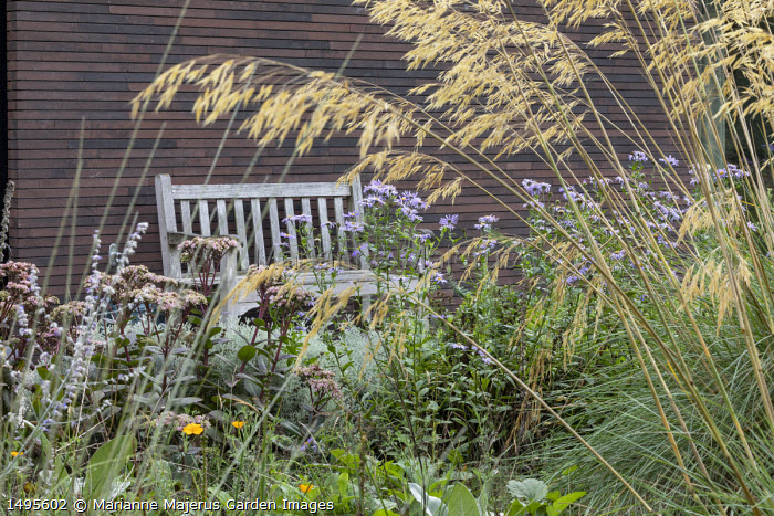 Stipa gigantea, Hylotelephium 'Matrona' syn. sedum, Aster thomsonii, wooden bench by house