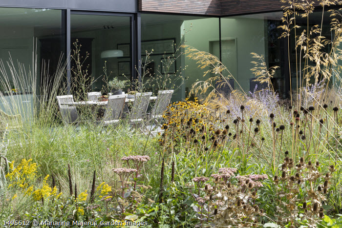 Solidago drummondii, Perovskia 'Blue Spire', Stipa gigantea, Hylotelephium 'Matrona' syn. sedum, Eryngium giganteum and Echinacea pallida seedheads, table and chairs on terrace by house, Muhlenbergia rigens, Althaea cannabina