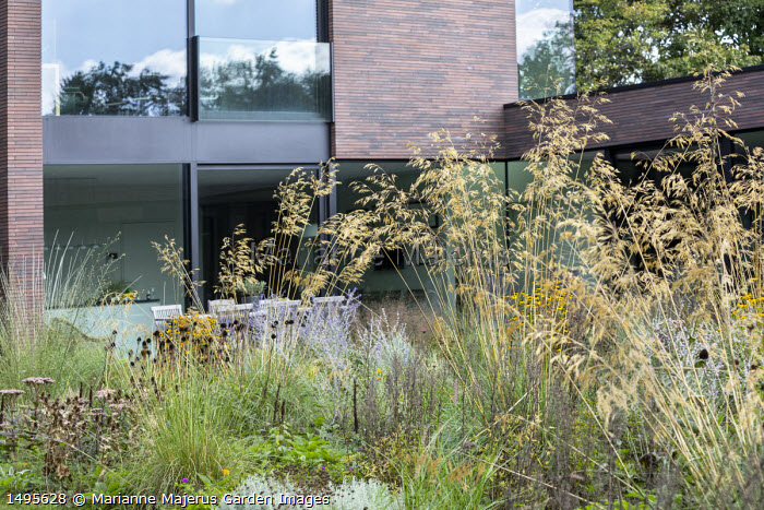 Stipa gigantea, Perovskia 'Blue Spire', Echinacea pallida seedheads, table and chairs on patio by house