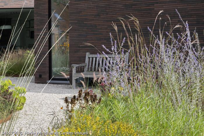 Perovskia 'Blue Spire', Andropogon gerardii 'Prairie Summer', Eryngium giganteum seedheads, Pennisetum orientale 'Karley Rose', wooden bench by house