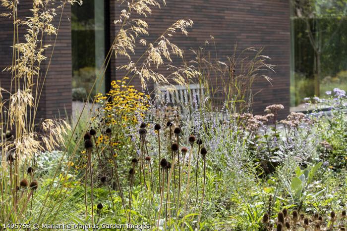 Hylotelephium 'Matrona' syn. sedum, Echinacea pallida seedheads, Stipa gigantea, Rudbeckia triloba 'Prairie Glow', Perovskia 'Blue Spire', Andropogon gerardii 'Prairie Summer'