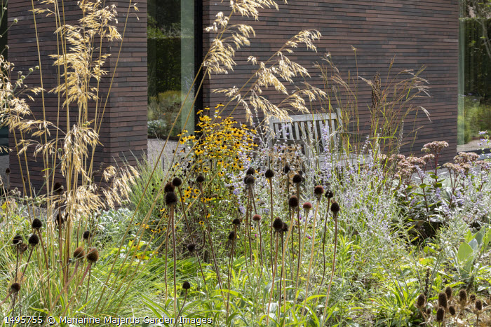 Hylotelephium 'Matrona' syn. sedum, Echinacea pallida seedheads, Stipa gigantea, Rudbeckia triloba 'Prairie Glow', Andropogon gerardii 'Prairie Summer', Perovskia 'Blue Spire'