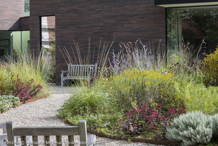 Sedum spectabile 'Bloody Mary', Muhlenbergia rigens, Santolina chamaecyparissus, Stachys byzantina, Solidago drummondii, Perovskia 'Blue Spire', curving beds with Cor-Ten steel edging leading to wooden bench by house, Andropogon gerardii 'Prairie Summer'
