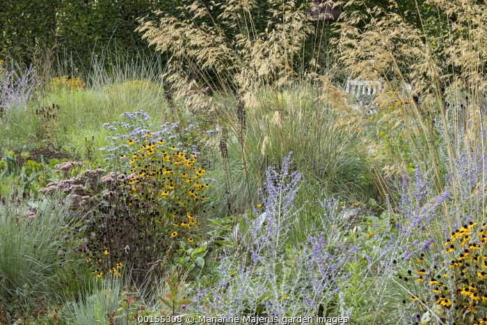 Perovskia 'Blue Spire', Stipa gigantea, Rudbeckia triloba 'Prairie Glow', Hylotelephium 'Matrona' syn. sedum, Aster thomsonii