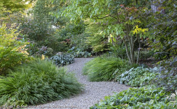 Gravel path through woodland borders, Hakonechloa macra, Cornus controversa 'Pagoda', Brunnera macrophylla 'Jack Frost', Tiarella wherryi