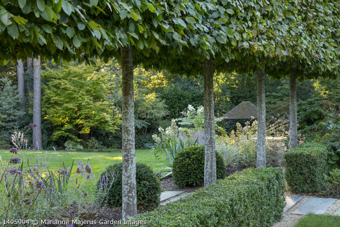 Pleached hornbeam screen, yew domes, clipped Buxus sempervirens hedge