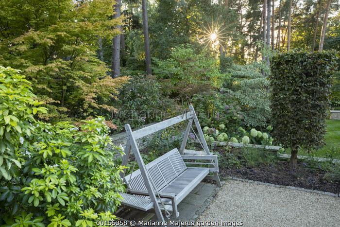 Wooden swing bench, Acer palmatum, choisya, hydrangea