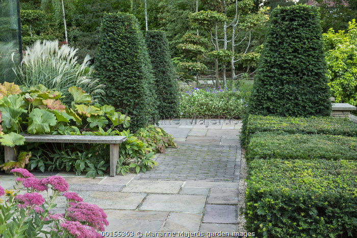 Wooden bench on stone patio, yew topiary and clipped hedge, Miscanthus sinensis 'Silberfeder', Darmera peltata syn. Peltiphyllum peltatum, sedum