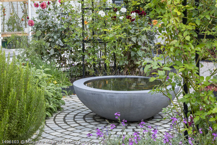 Raised pond in container on circular limestone sett patio, sage, rosemary, dahlia, roses, Urbis Lilybowl water bowl