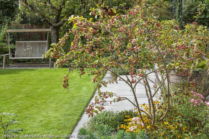 Malus 'Evereste' underplanted with Rudbeckia fulgida var. deamii, hanging swing seat overlooking lawn