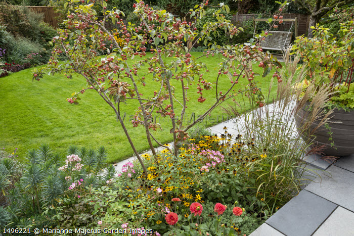 Malus 'Evereste' underplanted with Rudbeckia fulgida var. deamii, Euphorbia characias 'Humpty Dumpty', Rosa 'Ballerina', Miscanthus sinensis 'Ferner Osten', dahlia, cornus in pot on patio