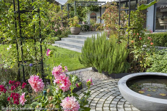 Raised pond in container on circular limestone sett patio, rosemary, dahlia, stone steps leading to table and chairs on terrace under pergola by house, Malus 'Evereste', Urbis Lilybowl water bowl