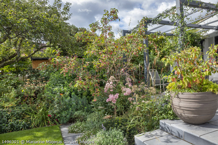 Malus 'Evereste' underplanted with Nepeta racemosa 'Walker's Low', Erigeron karvinskianus, Miscanthus sinensis 'Ferner Osten', Euphorbia characias 'Humpty Dumpty', Rosa 'Ballerina', cornus in container on steps, table and chairs under pergola by house