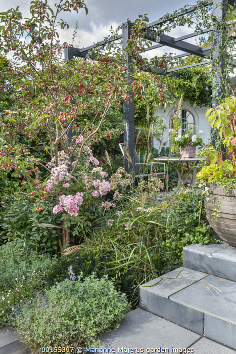 Malus 'Evereste' underplanted with nepeta, Erigeron karvinskianus, Miscanthus sinensis 'Ferner Osten', Nepeta racemosa 'Walker's Low', table and chairs under pergola by house