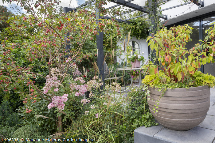 Malus 'Evereste' underplanted with Miscanthus sinensis 'Ferner Osten', Rosa 'Ballerina, cornus in container on steps, table and chairs under pergola by house