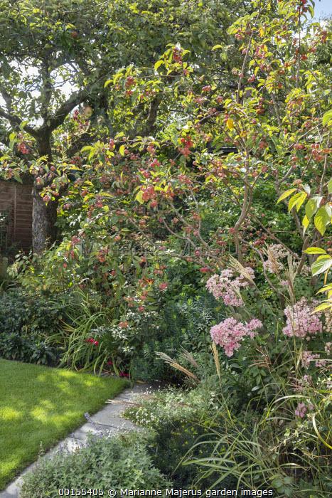 Malus 'Evereste' underplanted with Nepeta racemosa 'Walker's Low', Erigeron karvinskianus, Miscanthus sinensis 'Ferner Osten', Euphorbia characias 'Humpty Dumpty', Rosa 'Ballerina'