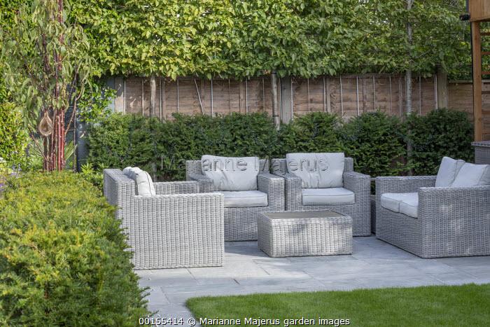Rattan sofas with cushions on stone patio, yew hedge, pleached Carpinus betulus screen
