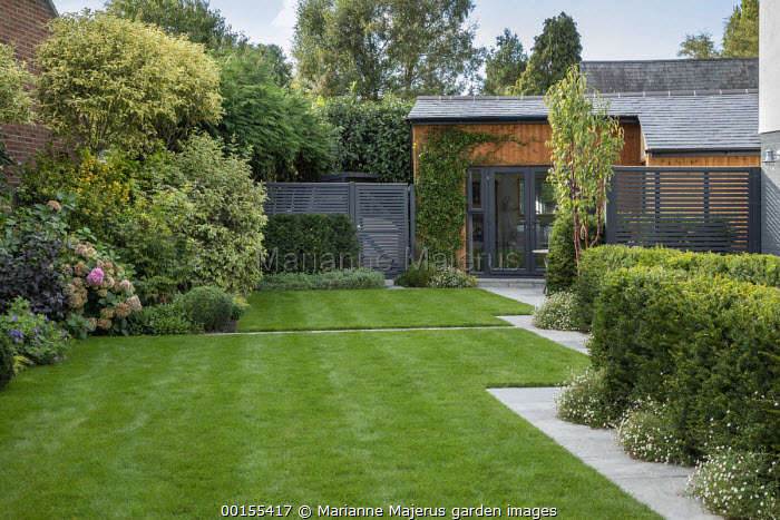 Formal lawn edged with stone mowing strip path, yew hedge underplanted with Erigeron karvinskianus, contemporary painted fence