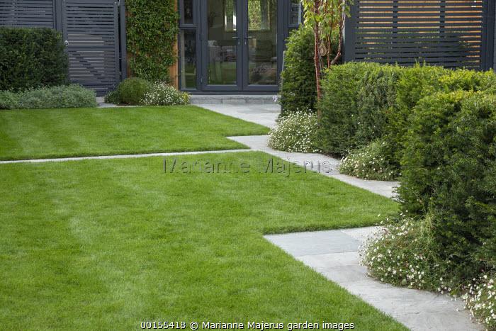 Stone mowing strip path around formal lawn, Taxus baccata hedge, Erigeron karvinskianus