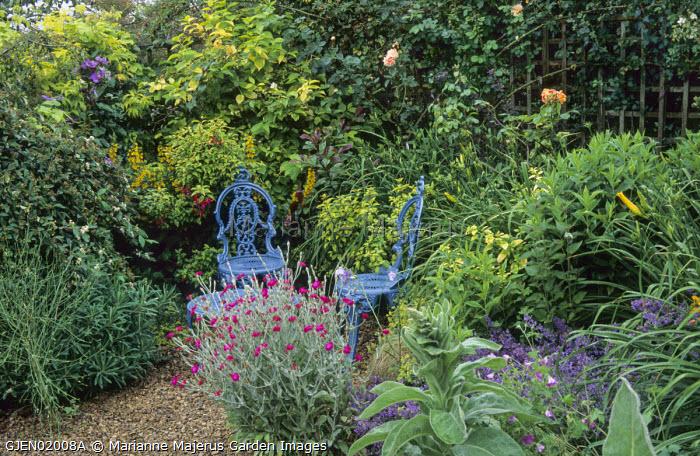Blue metal chairs in border, nepeta, roses, lysimachia, Lychnis coronaria