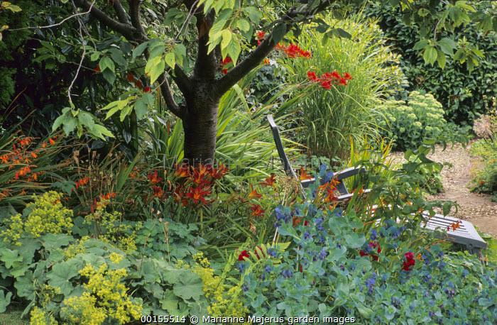 Wooden recliner chair under cherry tree, hemerocallis, Alchemilla mollis, crocosmia, Cerinthe major 'Purpurascens'