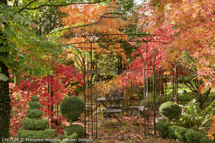 Table and chairs under metal arbour surrounded by Acer palmatum 'Orange Dream', Acer palmatum 'Atropurpureum, Acer japonicum 'Vitifolium', clipped Buxus sempervirens spiral and topiary