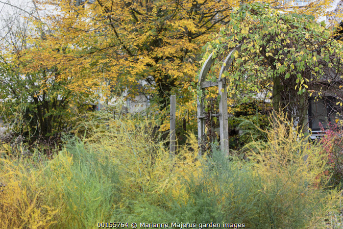 Wooden archway, asparagus
