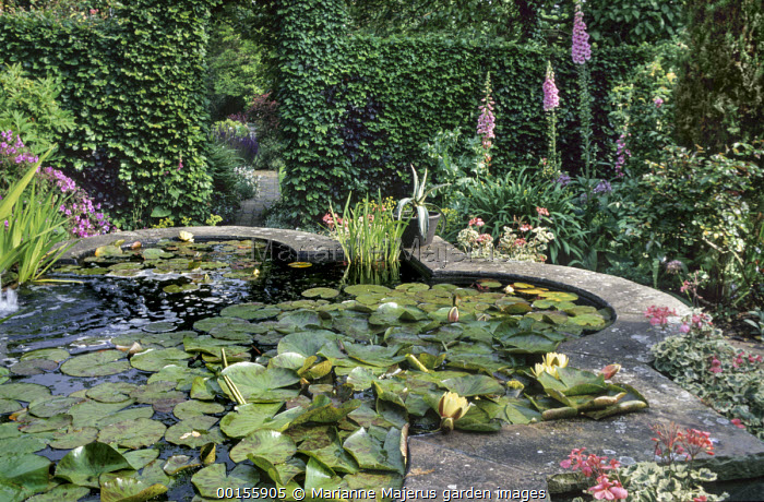 Raised pond with waterlilies, clipped archway in beech hedge