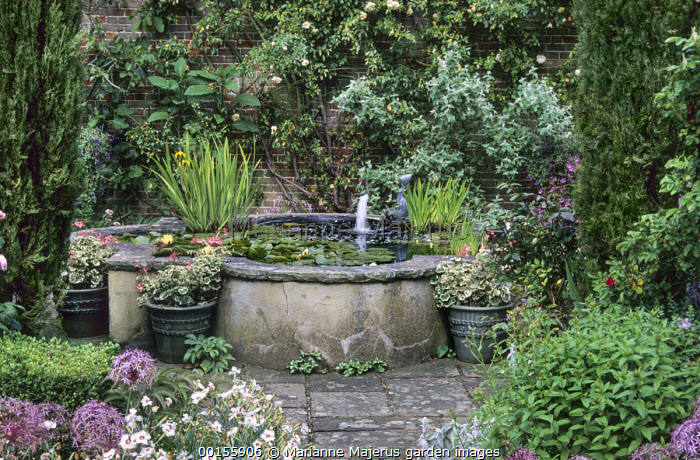 Raised pond with waterlilies, pelargoniums in pots