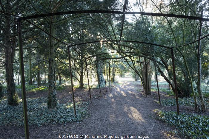 Metal tunnel pergola over path through yew woodland