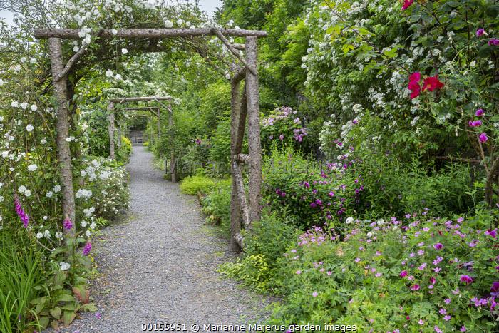 Gravel path under wooden rose arches, geraniums, Lathyrus grandiflorus