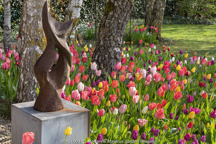 Metal sculpture on plinth, colourful mixed tulips around birch tree