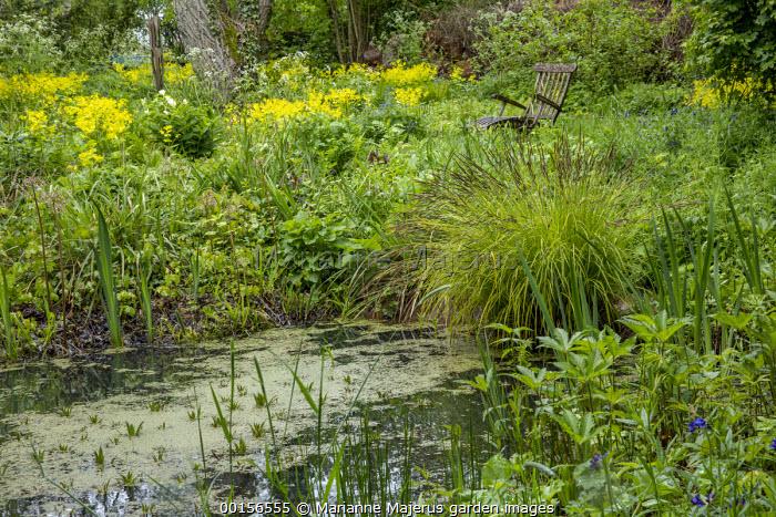 Wooden chair by natural wildlife pond, Smyrnium perfoliatum