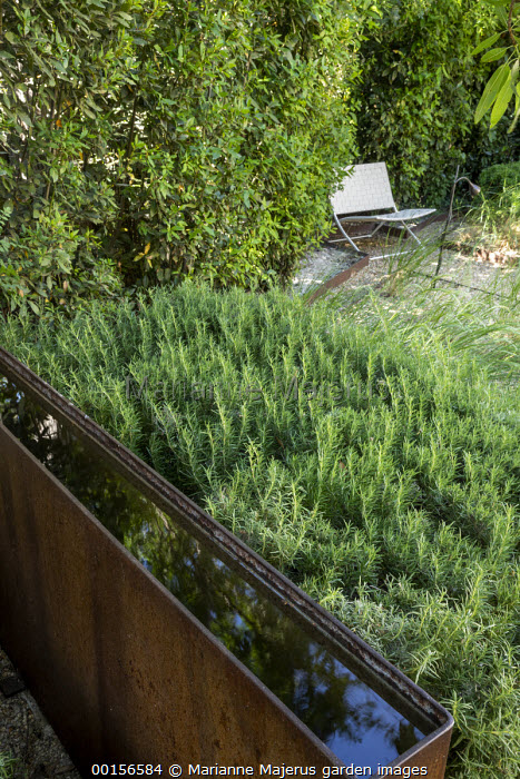 Raised steel rill, Rosmarinus officinalis hedge, white chair