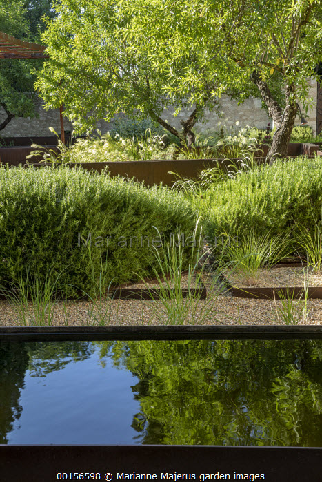 Rosmarinus officinalis hedge, reflective pool, steel border edging, gravel mulch, almond trees