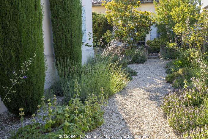 Gravel garden by house, Phlomis russeliana, lavender,