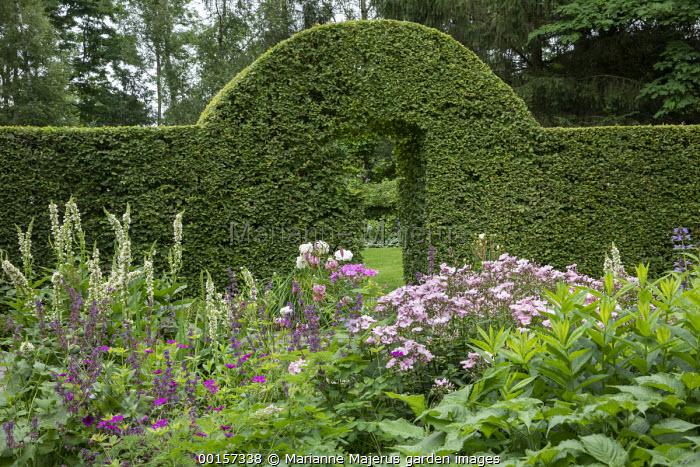 Clipped arch in yew hedge, Rosa 'Ballerina', Verbascum chaixii 'Album', Geranium 'Anne Thomson'