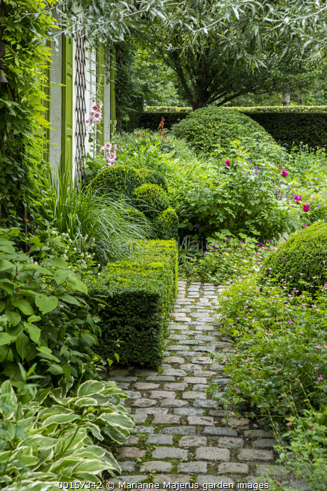 Stone sett path, clipped box hedge, Hosta crispula, geranium