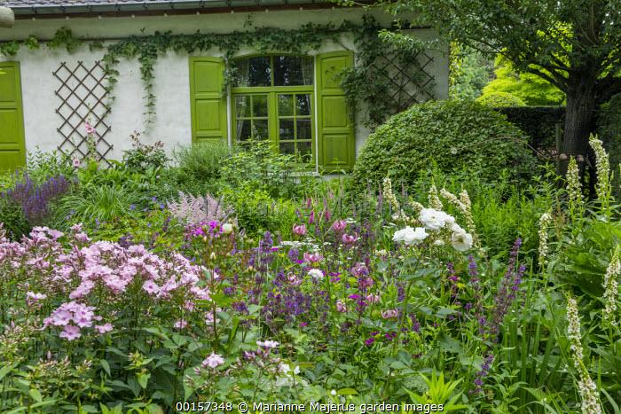 Lilium martagon, Rosa 'Ballerina', Verbascum chaixii 'Album', Astilbe 'Dito', green painted window and shutters
