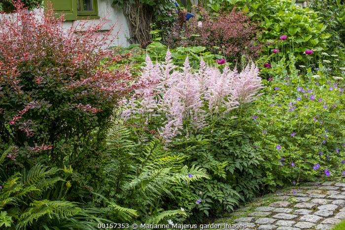 Astilbe 'Dito', Berberis thunbergii f. atropurpurea 'Rose Glow', geranium, stone sett path