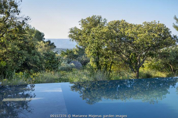 Infinity swimming pool in mediterranean garden, olive trees