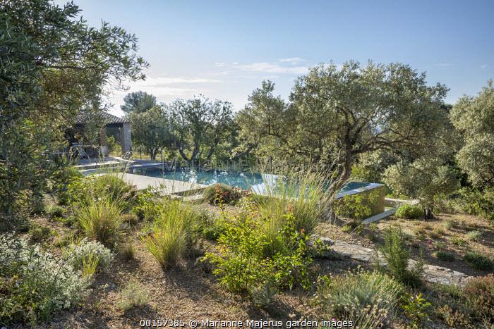 Raised infinity swimming pool in sloping mediterranean garden, olive trees